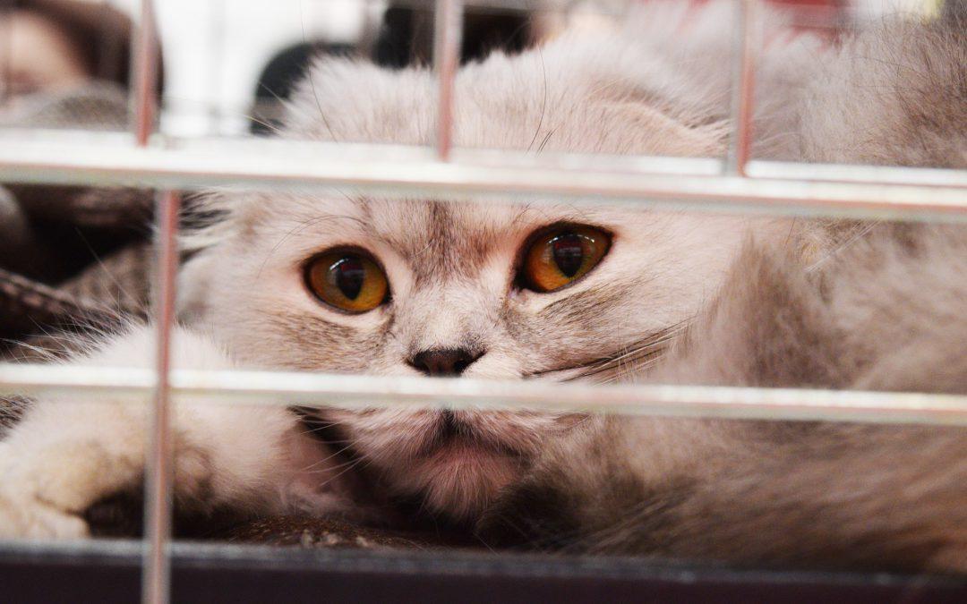 Espacio para cuarentenas en santuarios de animales