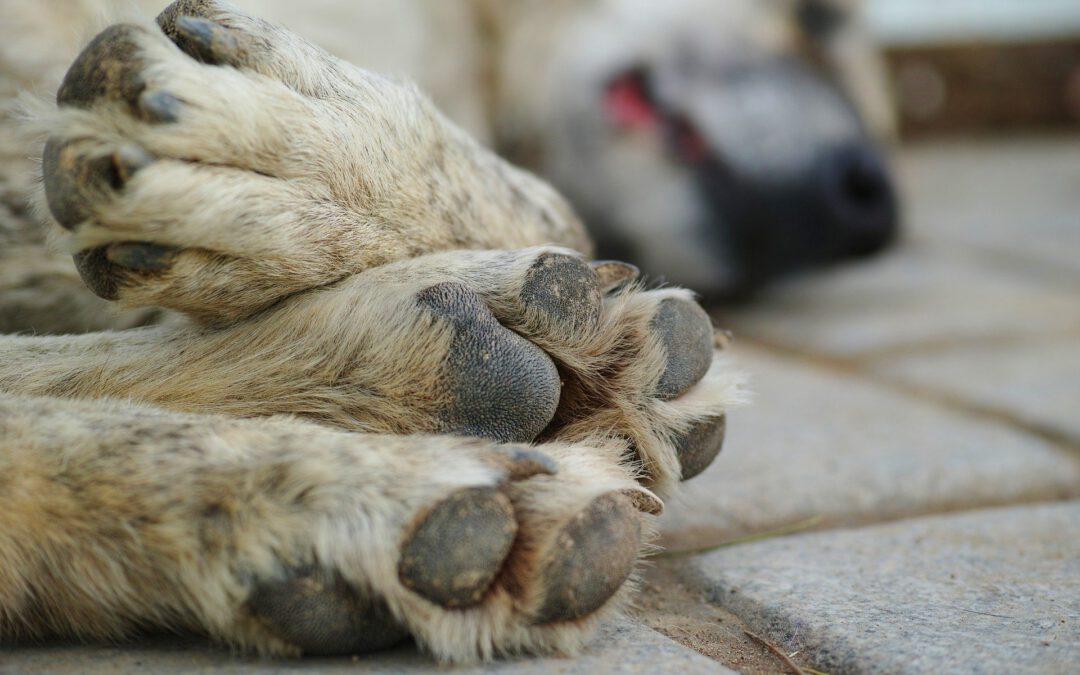 Timple, Grisito (y tantos otros): las prácticas de crueldad y la (ausencia de) justicia.
