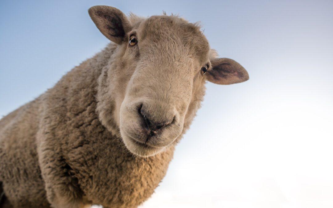 La empatía, la (in)formación y la sensibilización como claves para mantener relaciones positivas entre los santuarios y otras entidades protectoras de animales, el público y la sociedad.