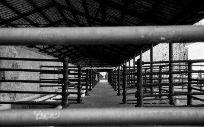 Luces y sombras de la instalación de cámaras en los mataderos