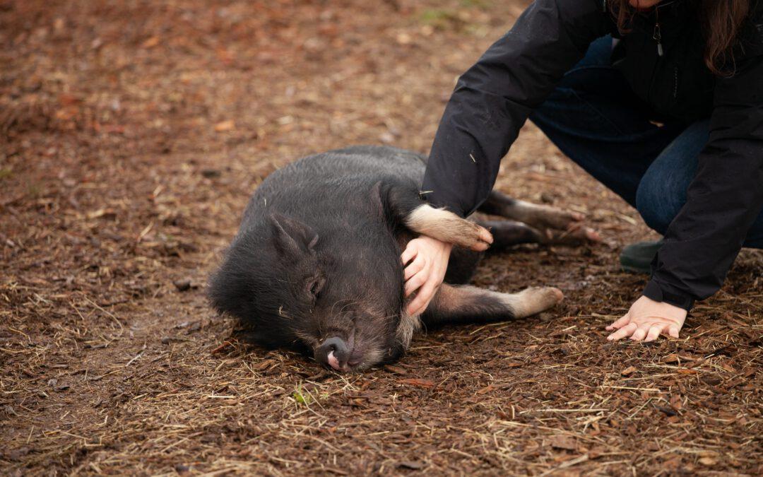 Microsantuarios: proyectos clave para la protección animal.