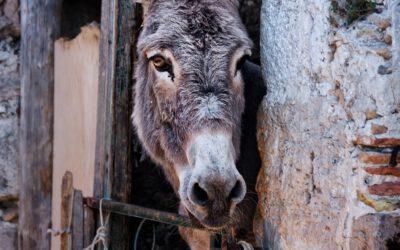 ¿Cómo poner una denuncia por maltrato animal?